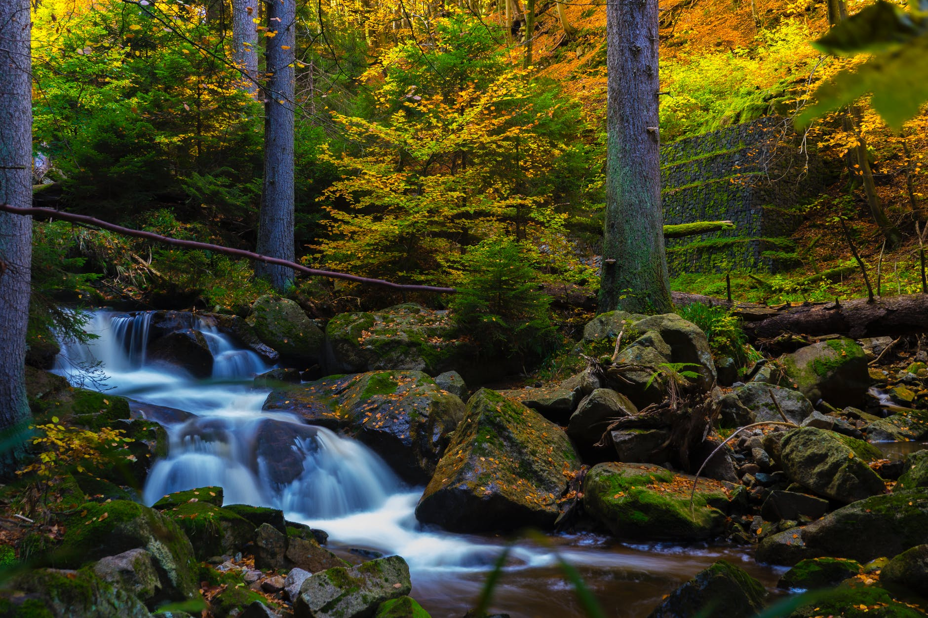 timelapse photography of falls near trees